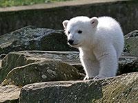 Видеонаблюдение в зоопарке
